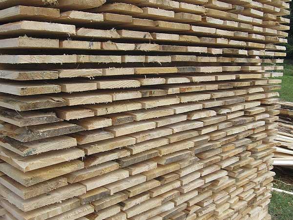 Come-essiccare-funghi-legno-ulivo-velocemente